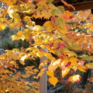 花の木の葉